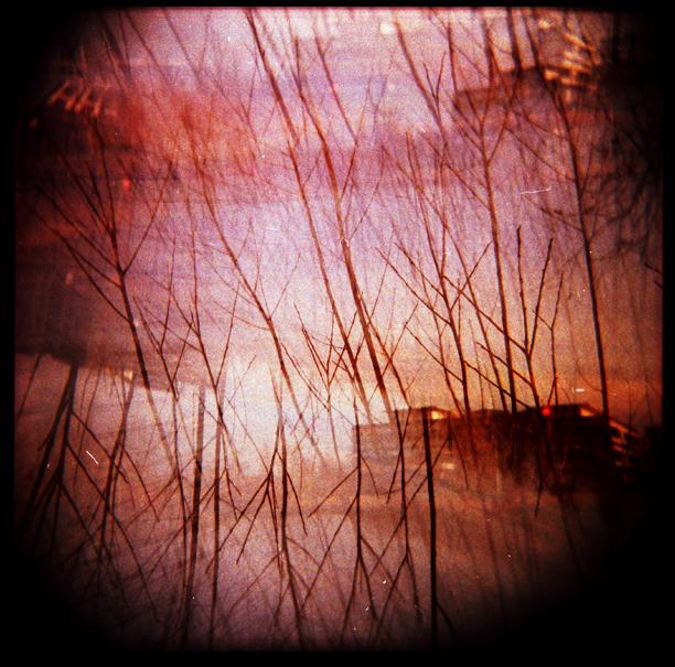 blurry sunset trees