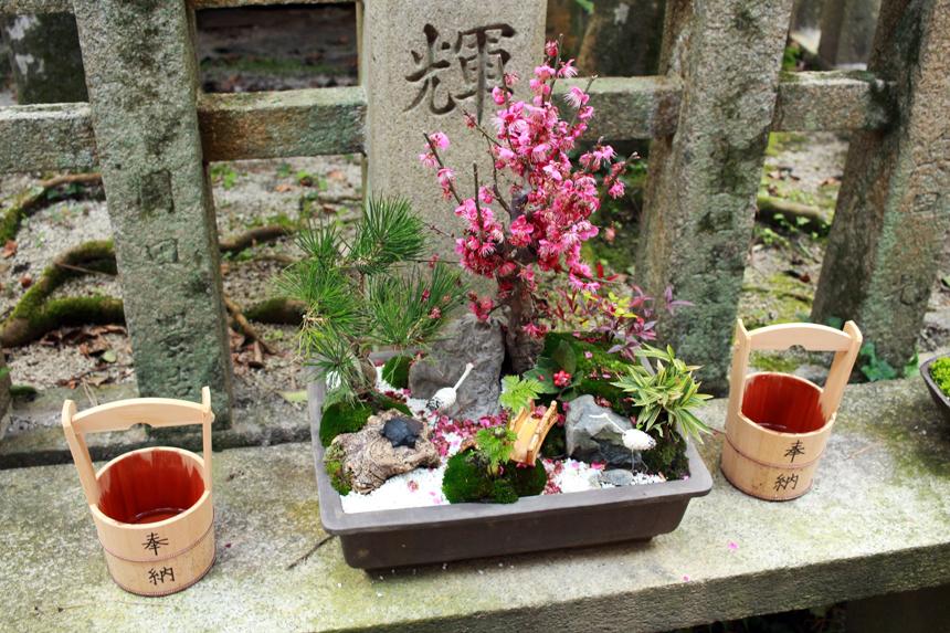 bonsai cherry sm