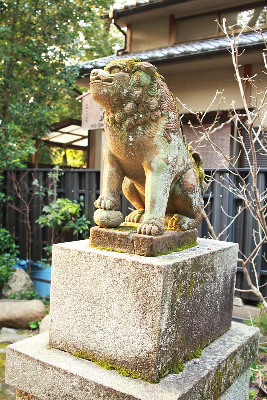 lion sm