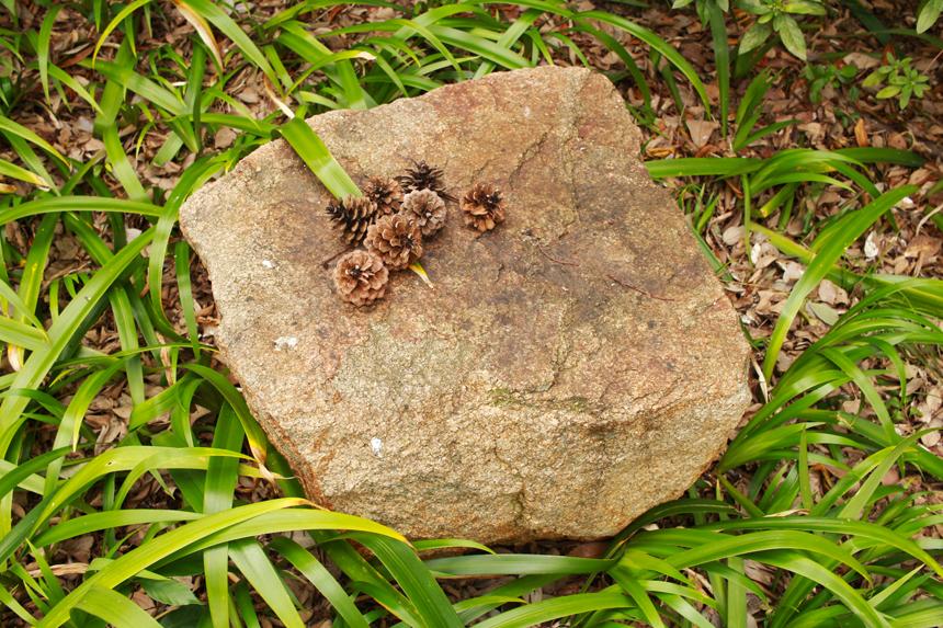 pine cones sm