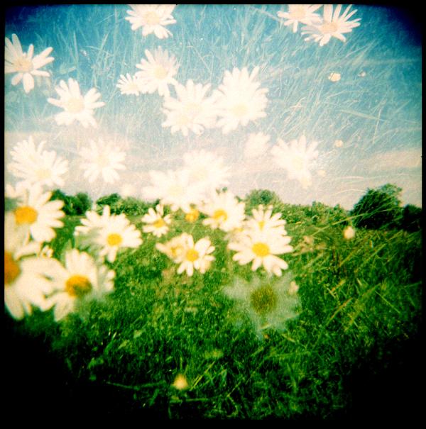 daisies double exposure