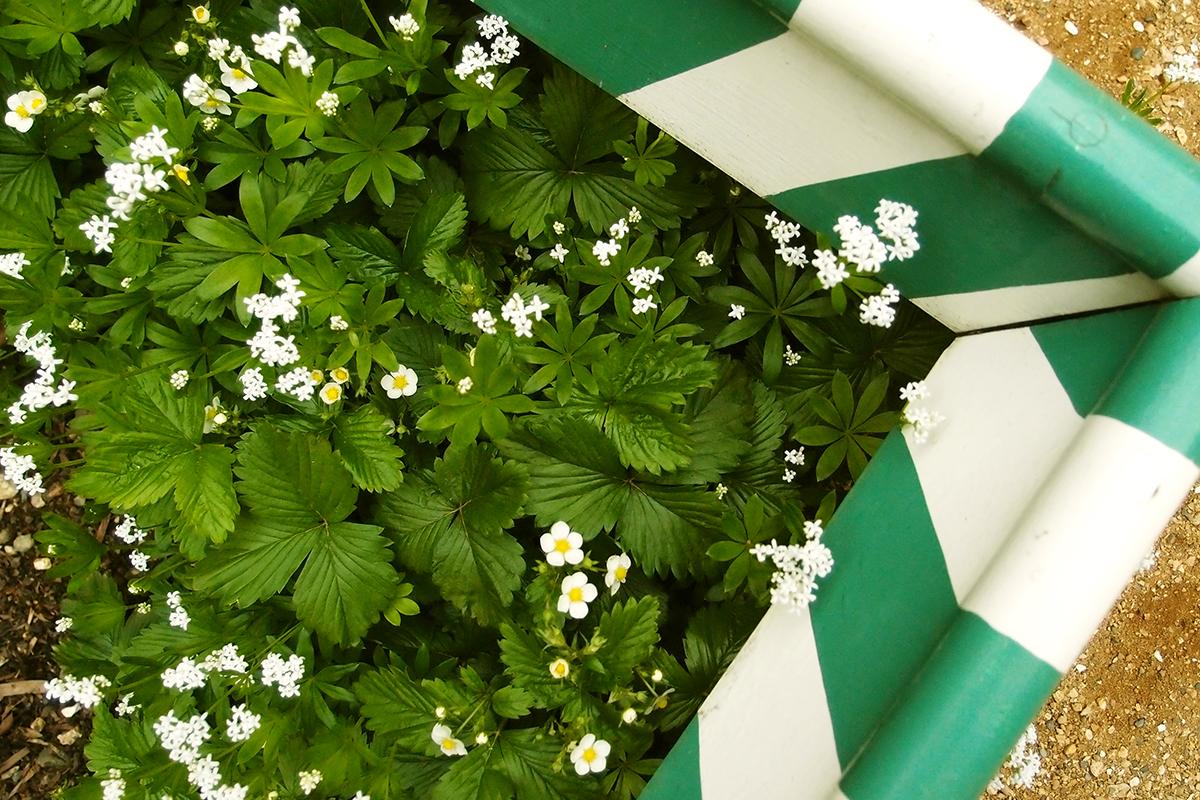 decorative flowerbed